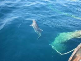 Эти удивительные дельфины (СИ)