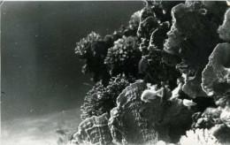 Морские хамелеоны (СИ)